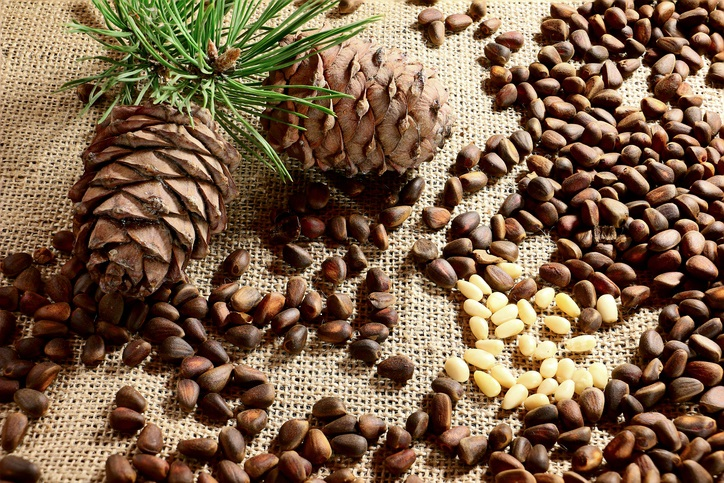 Siberian Pine nuts and  branches