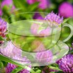 <b>Кому полезен чай из клевера</b>