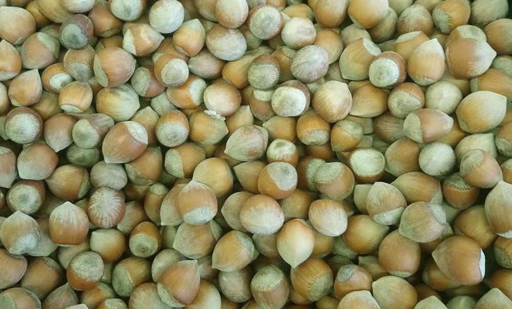 Чем полезны лесные орехи (лещина) для здоровья