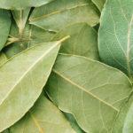 <b>Полезны ли лавровые листья для организма</b>