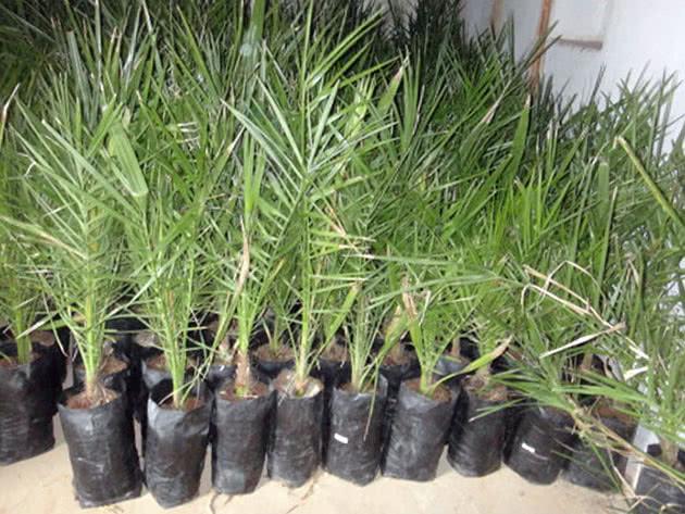 Какие растения вырастут из косточек?
