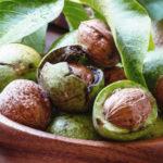 <b>Грецкий орех – самый полезный среди орехов!</b>