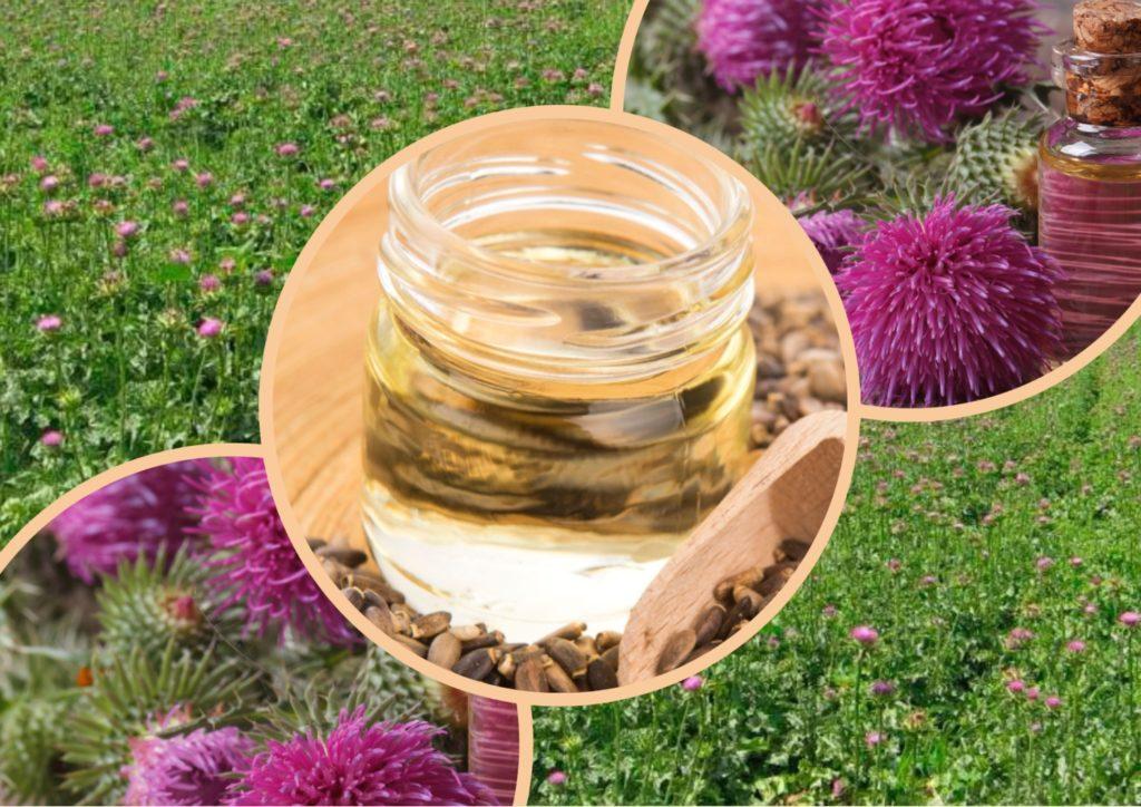 Масло расторопши - полезные и опасные свойства