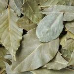 <b>Волшебная лаврушка: чем полезен благородный пряный лист?</b>