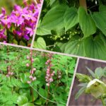 <b>Кавказские травы для женского здоровья</b>
