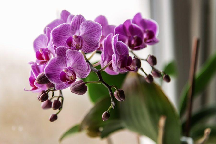 комнатное растение приносящее деньги