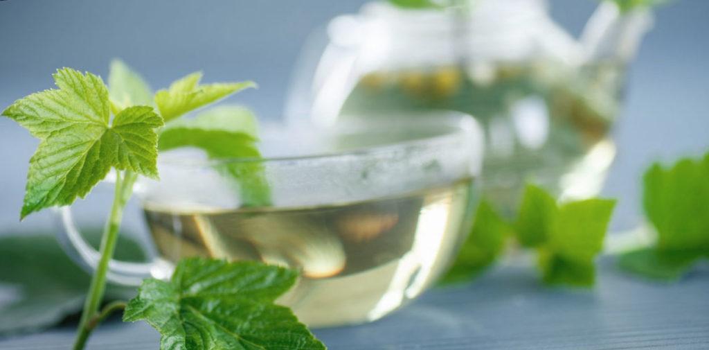 Польза чая из листьев черной смородины