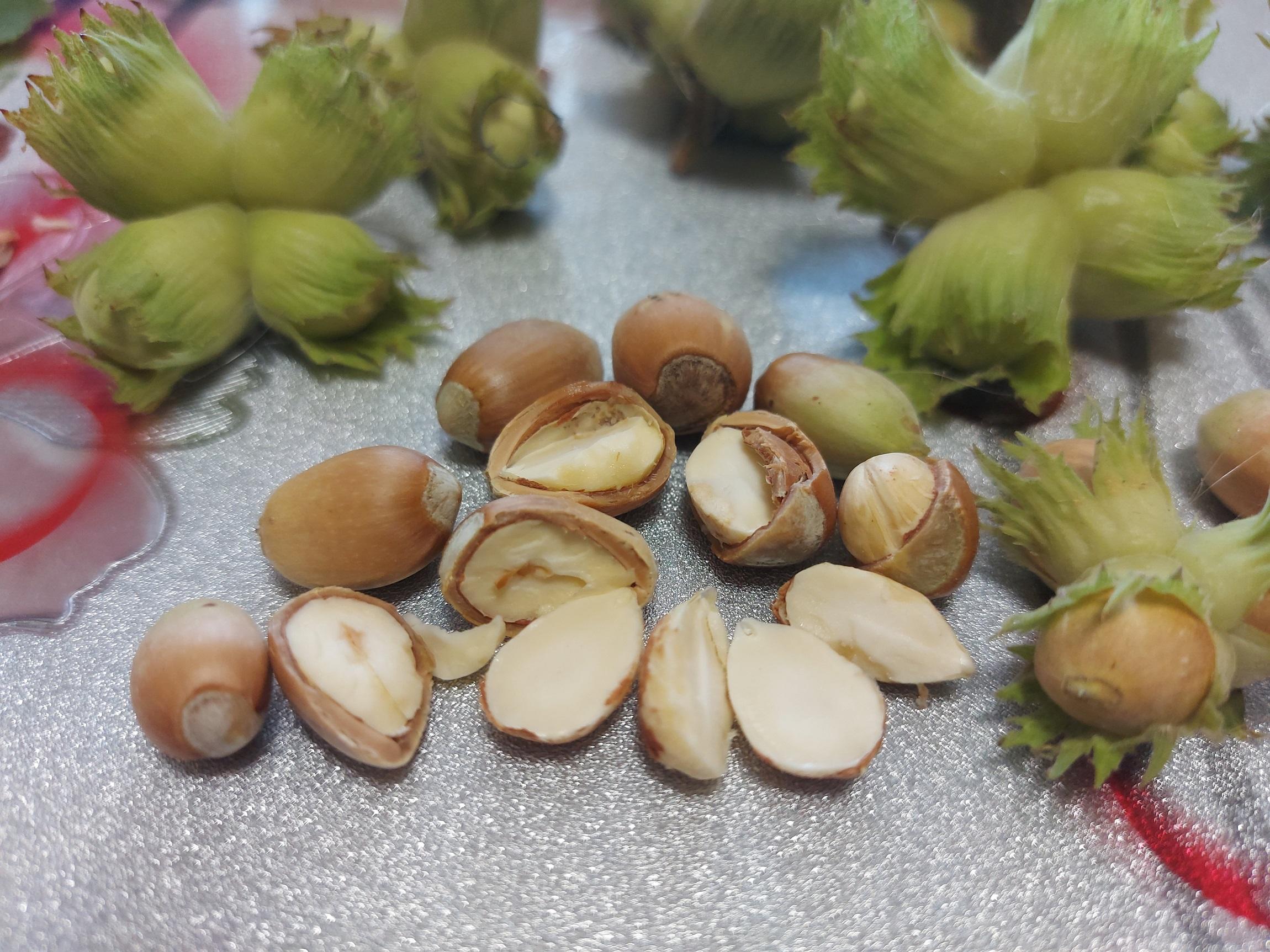польза лесных орехов