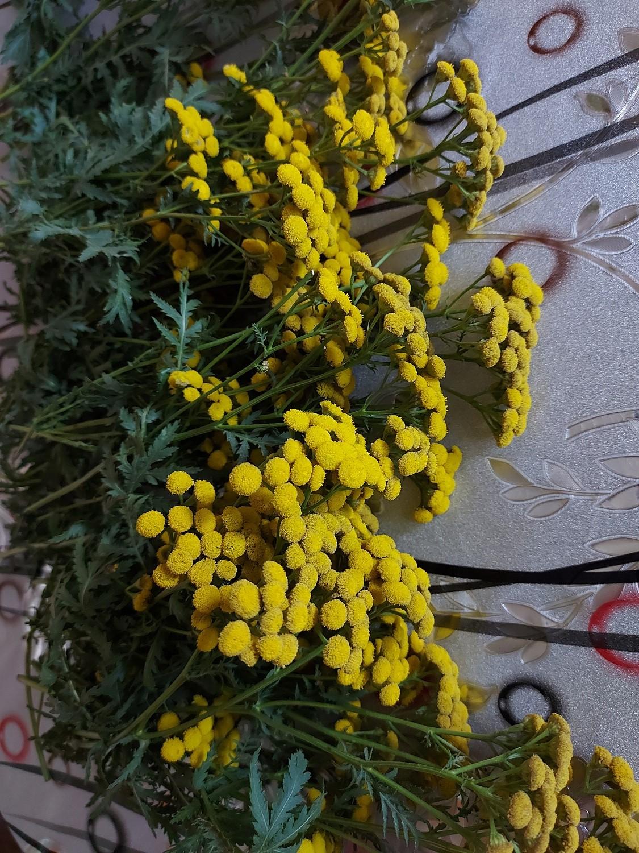 Пижма - всем доступное и полезное растение