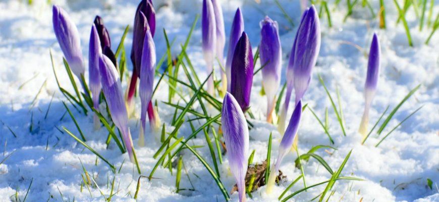 пожелания на 8 марта женщинам в прозе