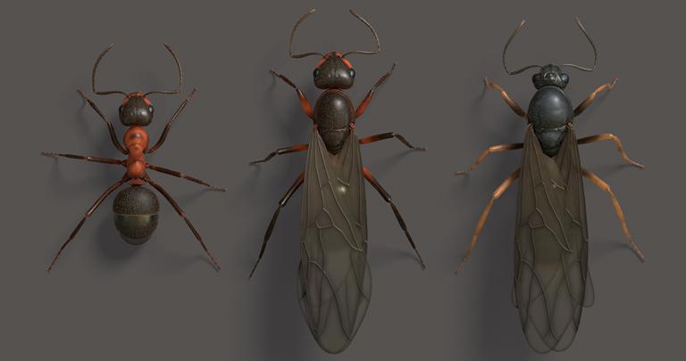 Жизнь муравьев в природе не перестает удивлять людей